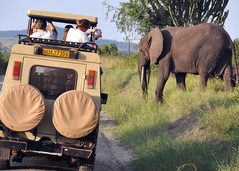 Elephant with Safari vehicle